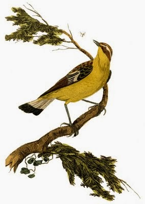 Vintage Yellow Bird Graphic Clip Art by The Graphics Fairy via Prodigal Pieces