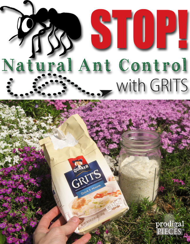 Stop the Ants! Natural Ant Control Using a Grocery Store Found Item: GRITS by Prodigal Pieces www.prodigalpieces.com